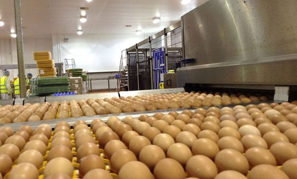 Noble Foods selects Paragon Software Systems' Integrated Fleets and strategic modelling to streamline egg distribution